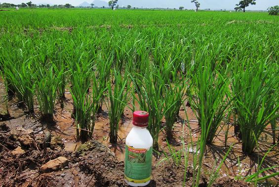 タンザニアの除草剤